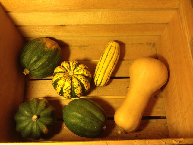 Just the beginning of the squash collection for this winter, tucked into a wooden crate so air can circulate and prevent mold.