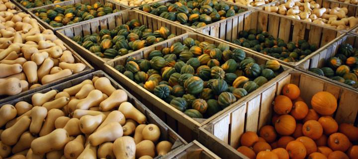 Rockville Market Farm: A winter squash wonderland