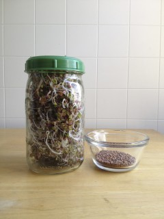 A tiny pile of seeds yields a whole jar of sprouts.